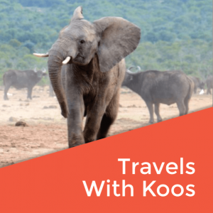 Travels With Koos